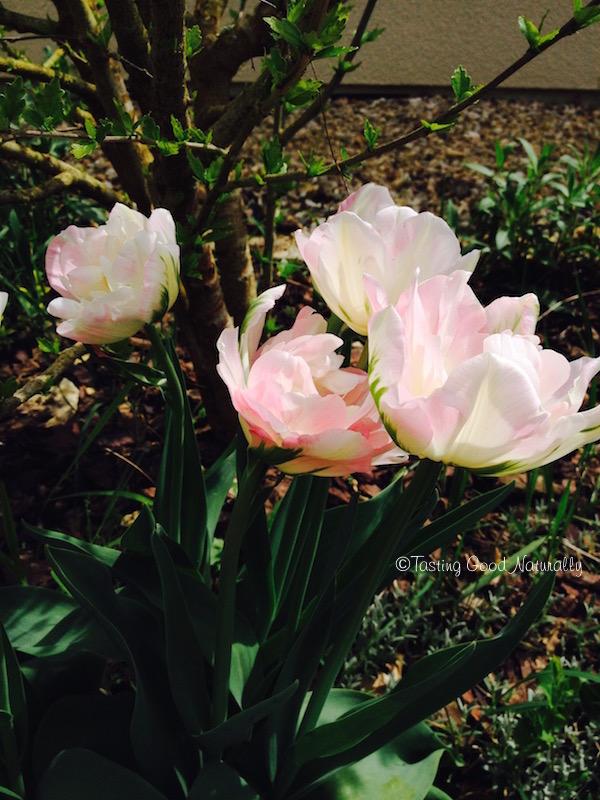 Tasting Good Naturally : Mes tulipes