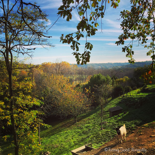 Tasting Good Naturally : Biquette automne 2015