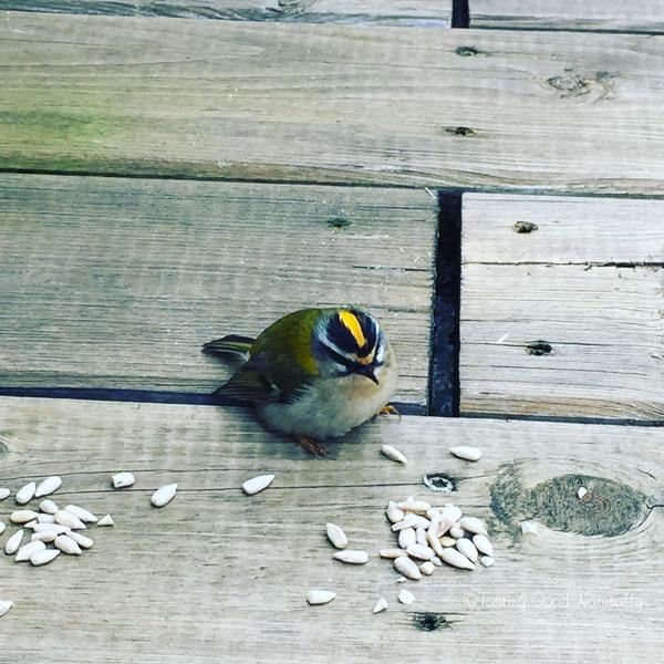 Tasting Good Naturally : Oiseau sauvé par Doudou février 2016
