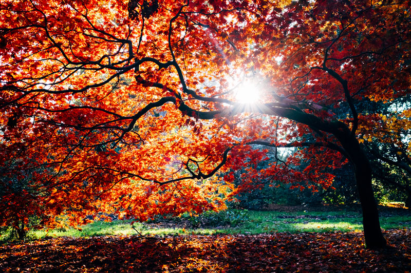 Tasting Good Naturally : L'automne s'est installé. En Naturopathie, chaque changement de saison à son importance. En ce moment, il est temps de lâcher prise…