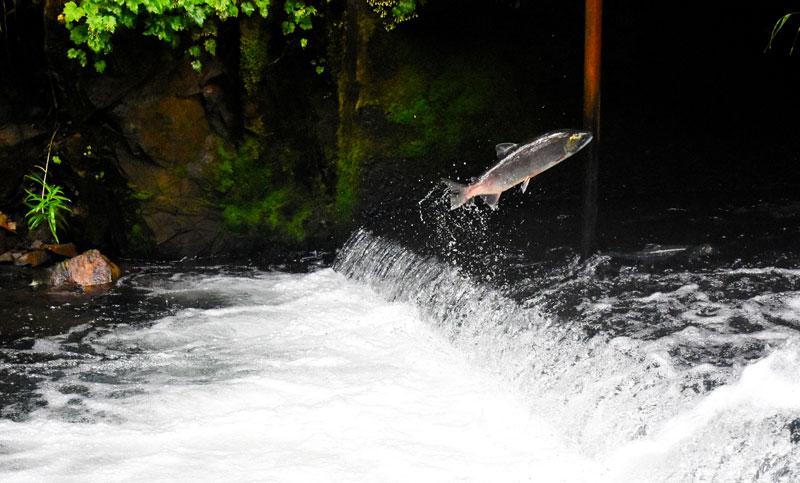 Tasting Good Naturally : En puisant mon inspiration au fin fond de ma belle Ecosse, je vous parle de l'importance de prendre conscience de votre force intérieure. Alors, êtes-vous un saumon ?