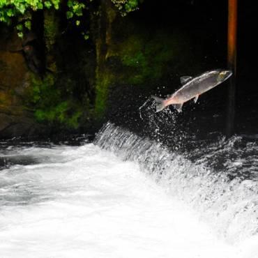Prendre conscience de sa force intérieure : Etre un Saumon