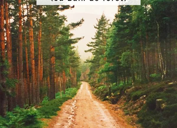 Expérimenter la promenade en forêt