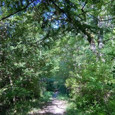 Déambulation dans la Nature - Forêt